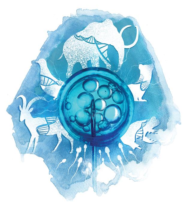 bbc wildlife illustration DNA cloning of extinct wildlife species off fertilisation danny allison illustrator