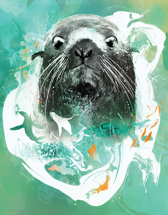 fur seal wildlife illustration portrait by animal nature illustrator danny allison